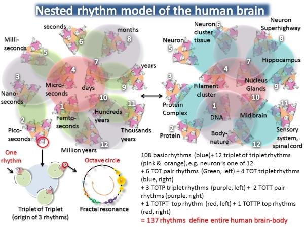 Nested Rhythm model of a human brain